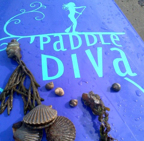 SEO & Online Marketing Case Study: Paddle Diva